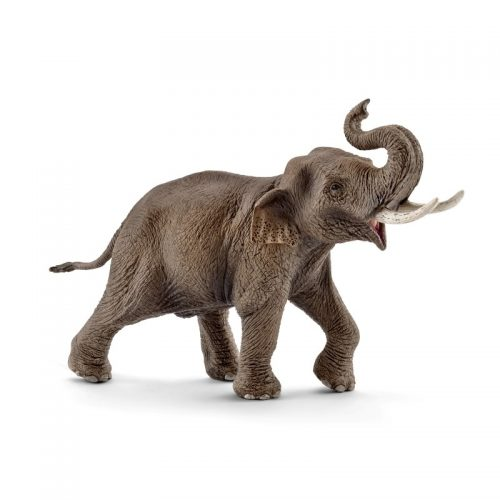 Asian Elephant Male